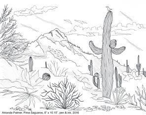 Pima saguaros