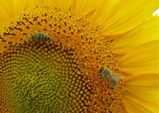 Smileflowers