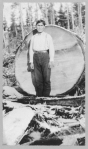 Wood cutter standing in front of log with a diameter almost equal his height, Alaska, ca. 1920