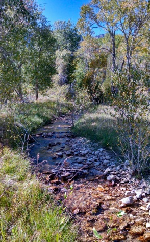 The stream at Ewing-Snell